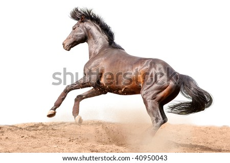 horse in action isolated on white - stock photo