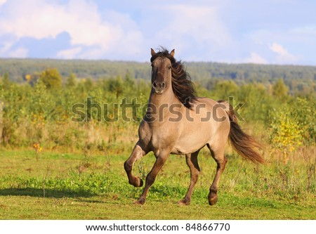horse in autumn - stock photo