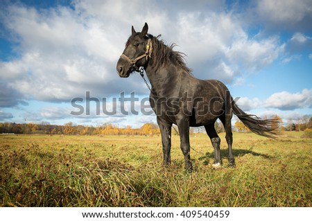 horse in autumn  meadow - stock photo