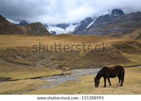 Horse in Cordiliera Huayhuash, Peru, South America