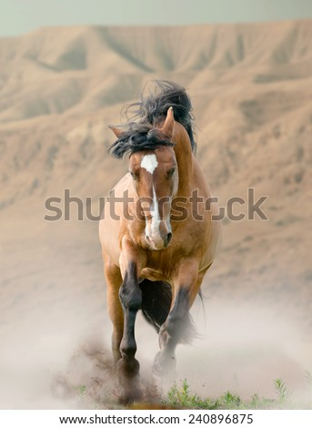 horse in desert - stock photo