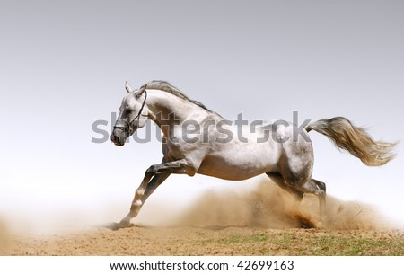 horse in dust