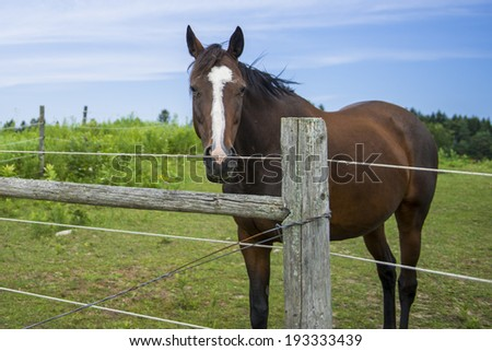 Horse in Fenced in Paddock - stock photo