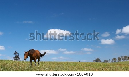 Horse in field and blue sky - stock photo