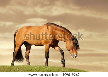 horse in field walking