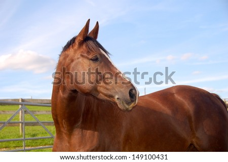 Horse in field with ears forward head and part of body.
