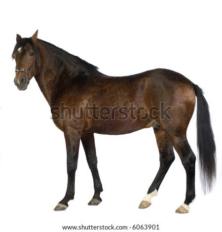 horse in front of a white background - stock photo