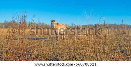 Horse in frozen wetland in sunlight