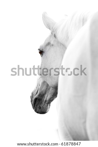 horse in high key - stock photo