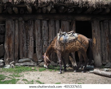 Horse in Himalayas