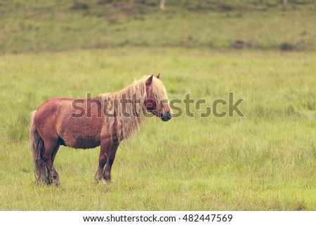 Horse in meadow field. Tranquil countryside scene.