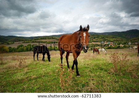 Horse in meadow. Nature composition.