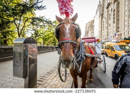 Horse in New York City - stock photo