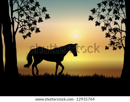 horse in pasture at sunrise - stock photo