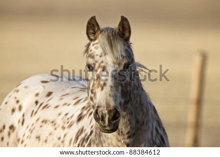 Horse in Pasture Canada Saskatchewan - stock photo
