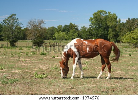 Horse in Rural East Texas