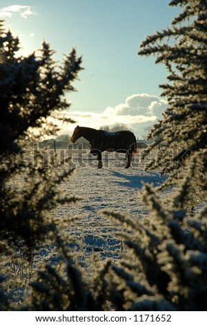 Horse in silhouette at sunrise - stock photo