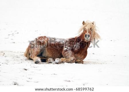 Horse in snow - stock photo