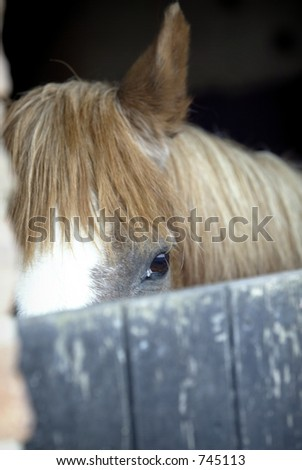 horse in stable looking shy - stock photo