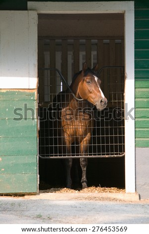 Horse in stable with door open, near Montpelier, James Madison's home in Orange, Virginia - stock photo