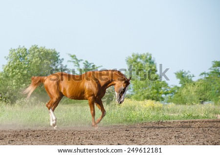 Horse in summer - stock photo