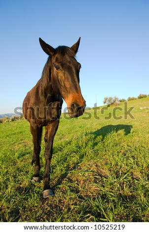 horse in the country field