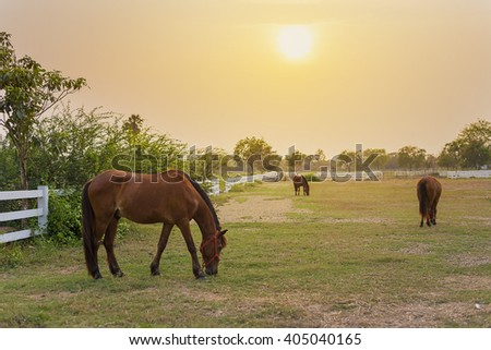 Horse in the farm at sunset - stock photo