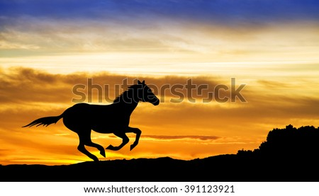 horse in the mountain - stock photo