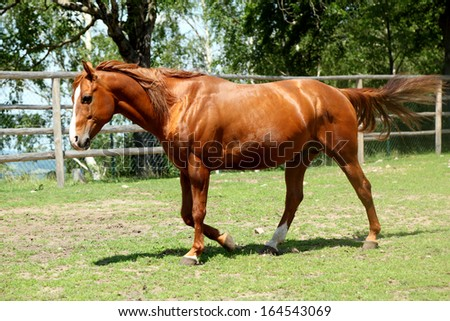 Horse in the paddock on a summer day - stock photo