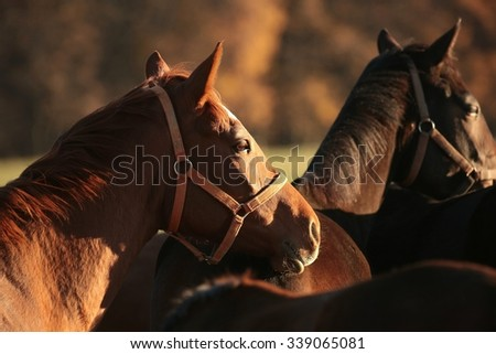 Horse in the pasture at dusk. - stock photo
