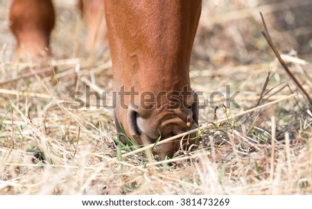 horse in the pasture eating grass - stock photo
