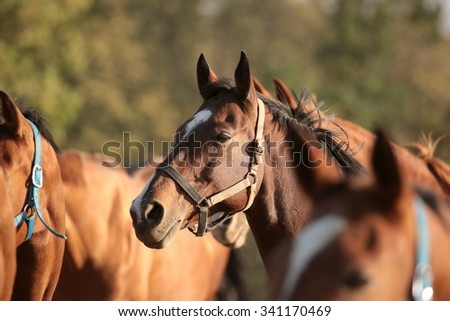 Horse in the pasture looking at other horses. - stock photo
