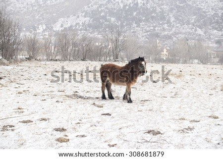 Horse in the snow - stock photo