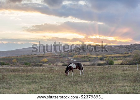 horse in the sunset meadow