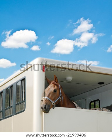 Horse in the van on bright summer day - stock photo