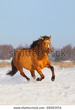 horse in winter - stock photo