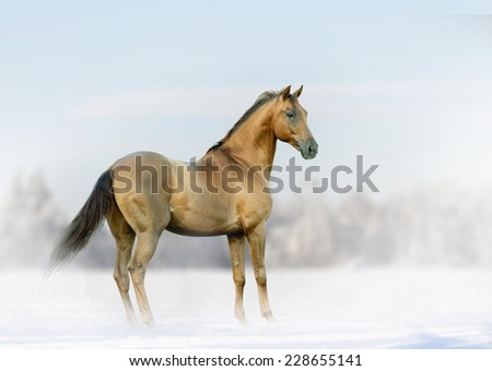 horse in winter fog - stock photo