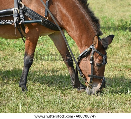 Horse is eating grass in summer