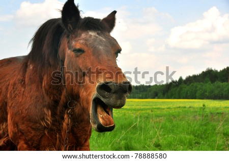 horse is laughing - stock photo