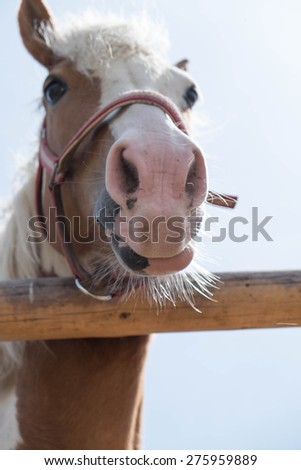 Horse is looking for you - stock photo
