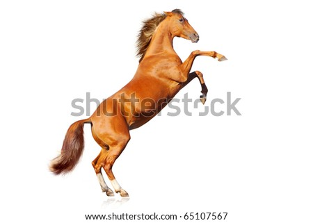 horse isolated - stock photo