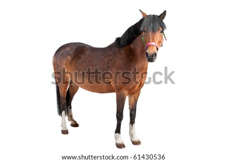 horse isolated on a white background