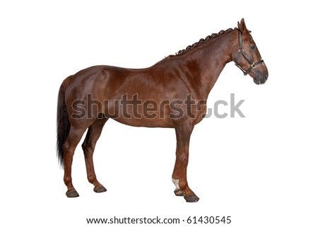 horse isolated on a white background - stock photo