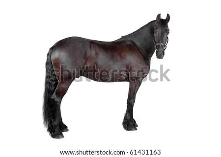horse isolated on a white background - stock photo