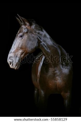 Horse isolated on black - stock photo
