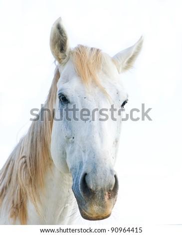 Horse isolated on white background - stock photo