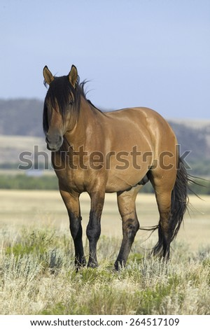Horse known as Casanova, one of the wild horses at the Black Hills Wild Horse Sanctuary, the home to America's largest wild horse herd, Hot Springs, South Dakota - stock photo