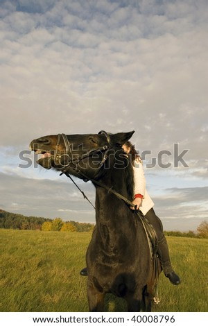 Horse laughs. Horsewoman rides a horse across the field.