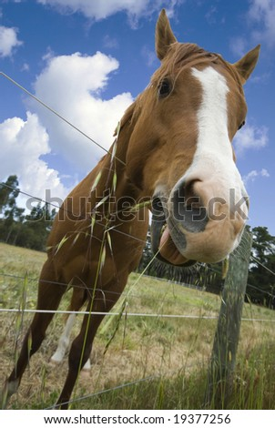 Horse leaning over fence to eat grass on other side - stock photo