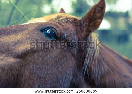 Horse left eye with shallow depth of field eye profile with shallow depth of field and cross processing - stock photo